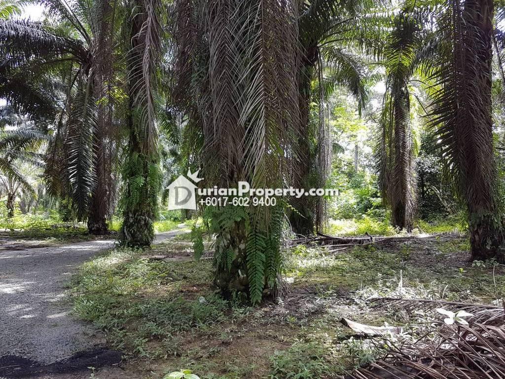 Agriculture Land For Sale at Kampong Gajah, Perak