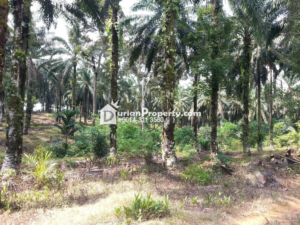 Agriculture Land For Sale at Kluang, Johor