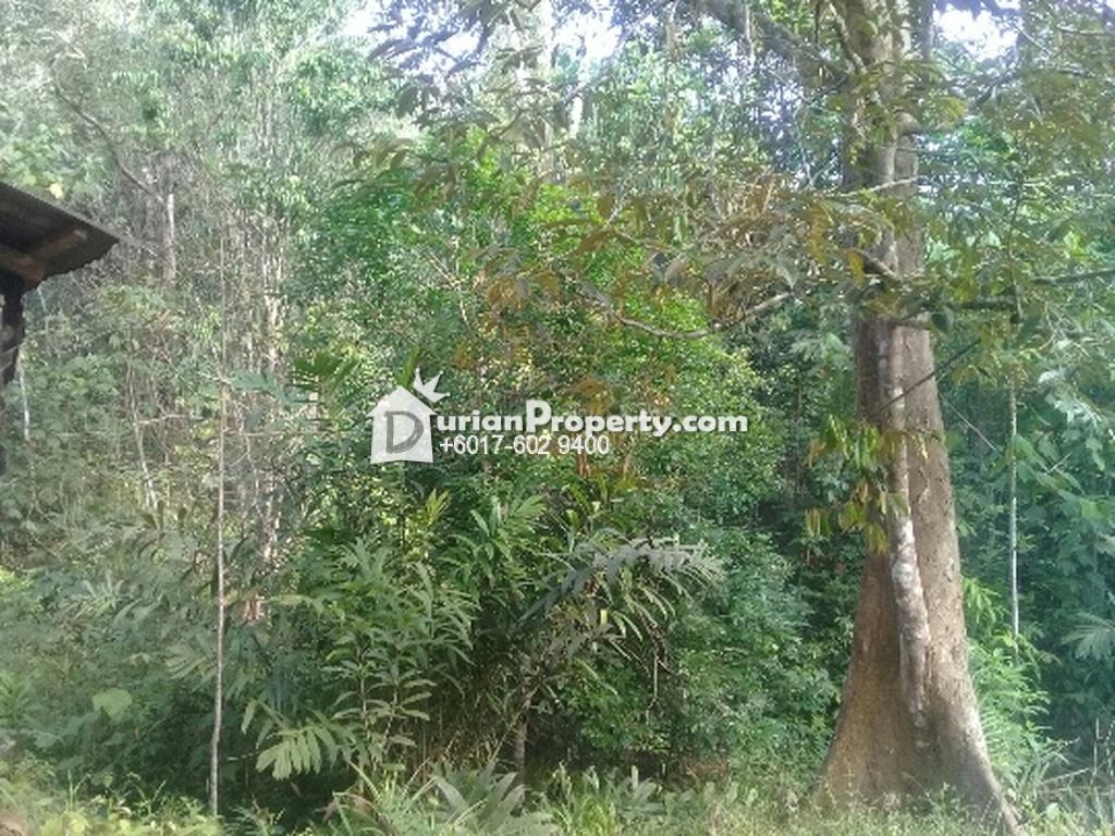 Agriculture Land For Sale at Temangan, Kelantan