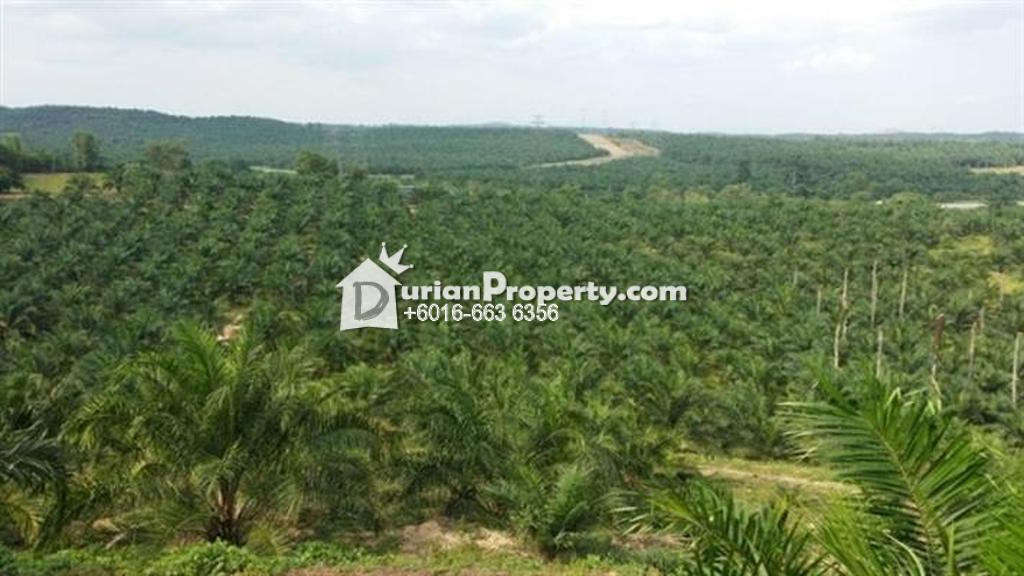 Agriculture Land For Sale at Pedas, Negeri Sembilan