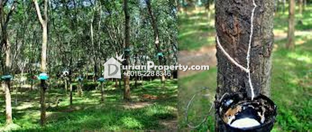 Agriculture Land For Sale at Kelantan, Malaysia