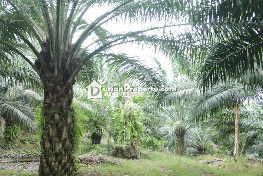 Agriculture Land For Sale at Kampung Gajah, Perak