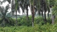 Agriculture Land For Sale at Kuala Langat, Selangor