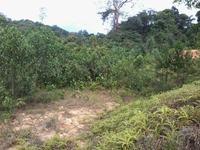 Property for Sale at Langkawi