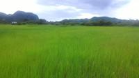 Property for Sale at Padang Besar