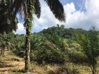 Property for Sale at Sungai Jawi