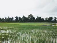 Property for Sale at Penaga