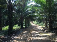 Property for Sale at Sungai Ruan
