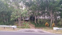 Agriculture Land For Sale at Pauh, Perlis