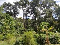 Property for Sale at Balik Pulau