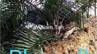 Property for Sale at Sandakan