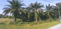 Agriculture Land For Auction at Rompin, Pahang